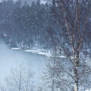 Snowstorm at Tarn Hows by Nina Kathryn Claridge Photography